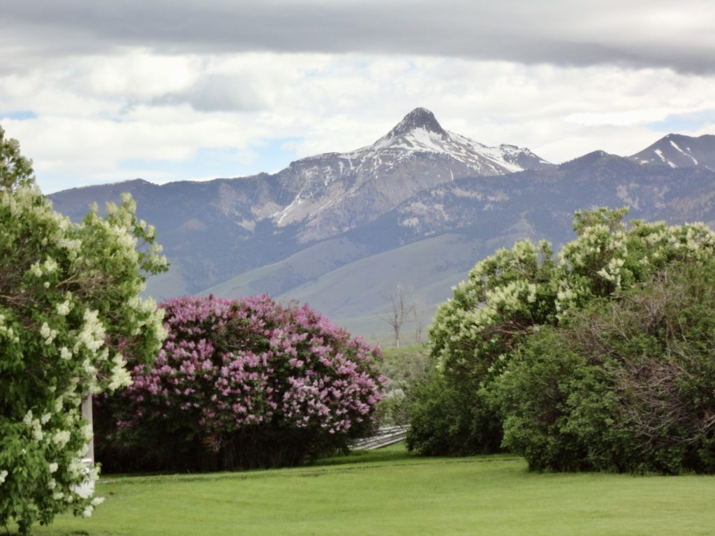 Horse Creek Ranch+Idaho+Mountain Men+Oar Spring+ Bell Mountain+Yard+Lilacs